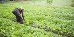 Regional action crucial for financial inclusion of small enterprises in Africa